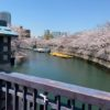 あの、富岡八幡宮と門仲、桜を歩く、軒並み天ぷら屋でした。