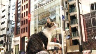 銀座シックスにリアル招き猫が現れた!・・・世界的美人に、厚岸牡蠣ランチ、いいね^^