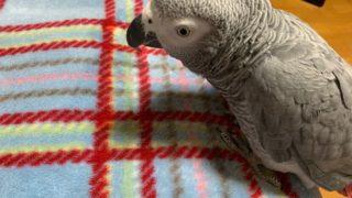 探しものは何ですか?探し疲れダラダラ病、でも仕事は辞めません、鳥と話す。