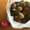 「出て行ってくれ」と言われても、  こちらにも老後計画がある・・・キウィー収穫、リンゴも買った。